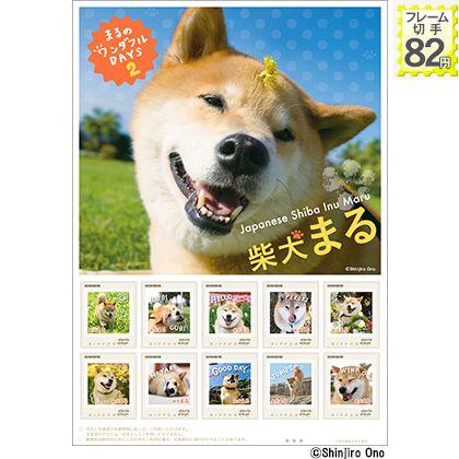 柴犬まる 2