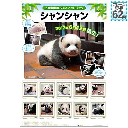 上野動物園 ジャイアントパンダ シャンシャン誕生記念