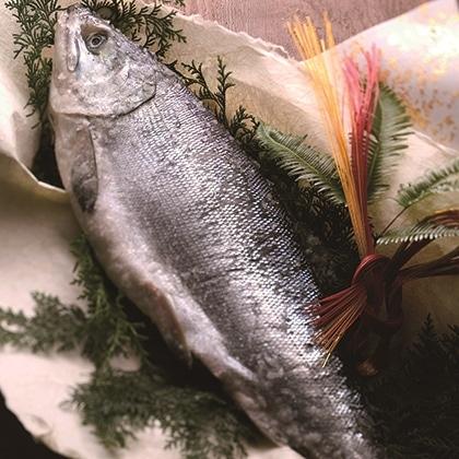 [手塩鮭]新巻鮭