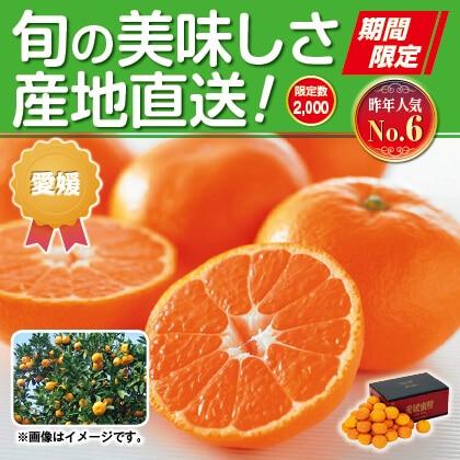 愛媛みかん(家庭用)3kg