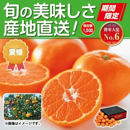 愛媛みかん(家庭用)5kg