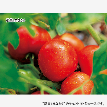 信州生まれのおいしいトマト 低塩
