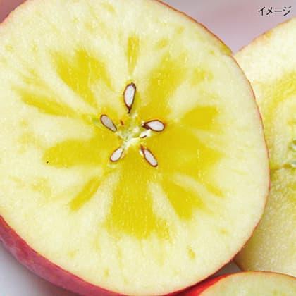 青森県産 蜜入 サンふじりんご