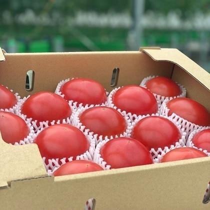 さやまるプロジェクトの朝採り完熟トマト