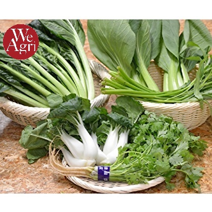 中華野菜 5種セット