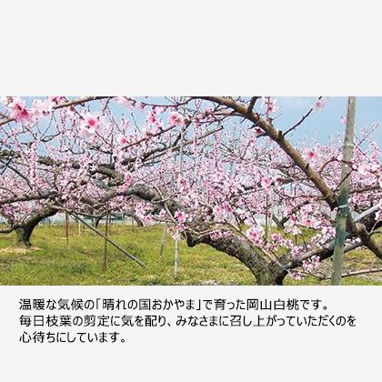 【期間限定商品】岡山白桃 1.8kg
