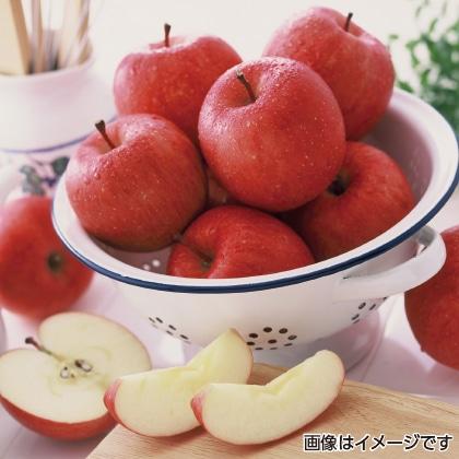 青森りんご「サンふじ」 3kg  【12月5日以降発送】