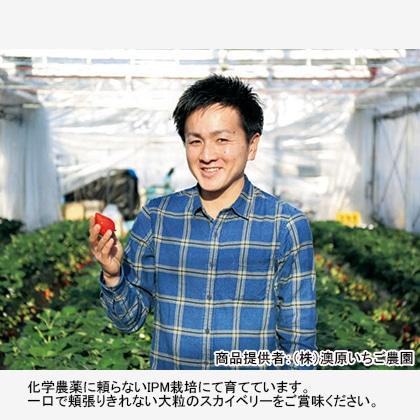 完熟朝摘み スカイベリー ギフト用A 【12月15日以降発送】