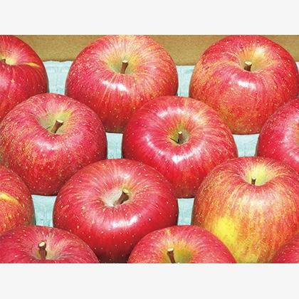 【期間限定】 信州りんご サンふじ ご家庭用 10kg