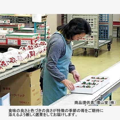 季節のいちご  【2022年1月17日以降発送】