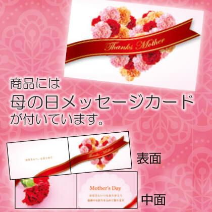 香りの薔薇 アワ ラスト サマー