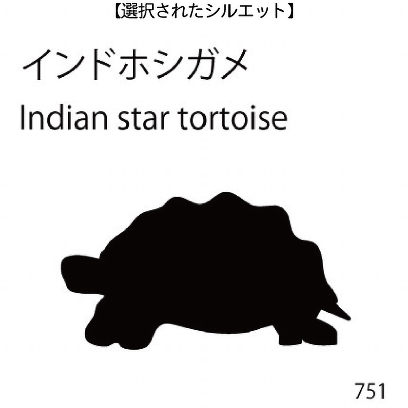 お名前スタンプ インドホシガメ(751)