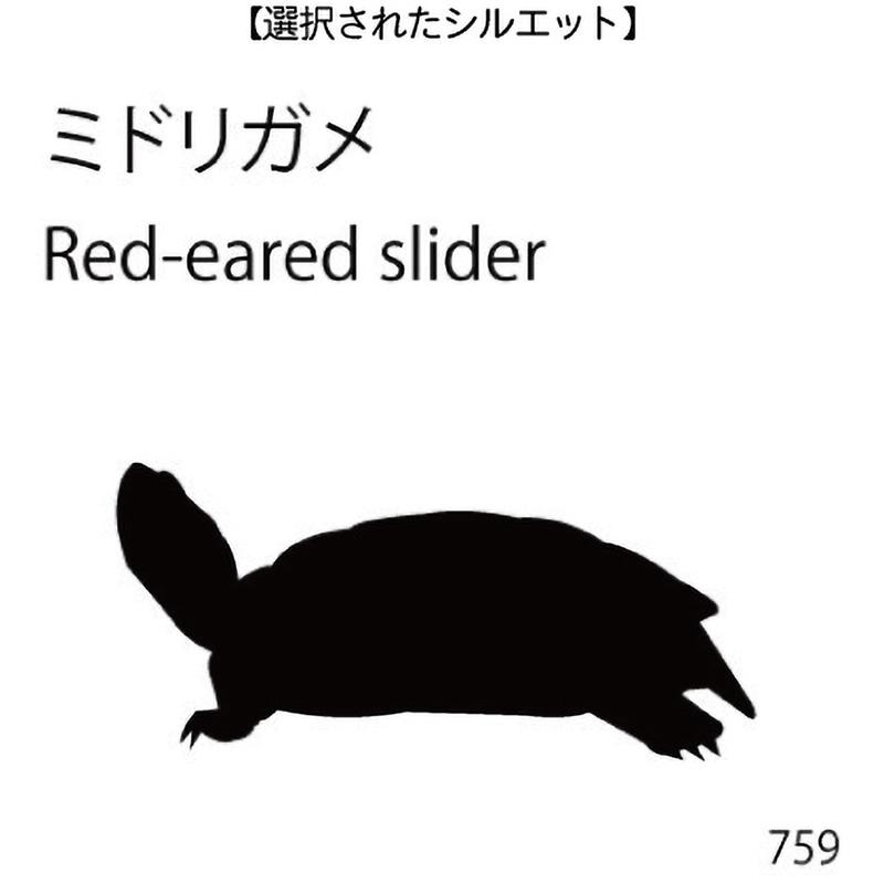お名前スタンプ ミドリガメ(759)