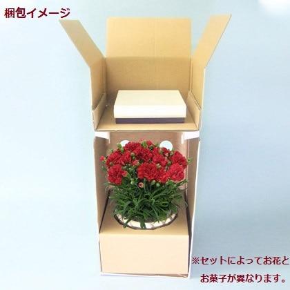 ピンクのカーネーション&亀屋万年堂 東京 茶和らか