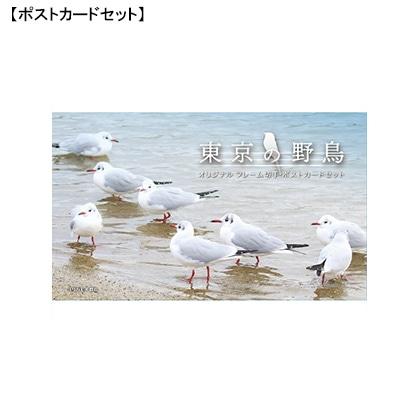 東京の野鳥