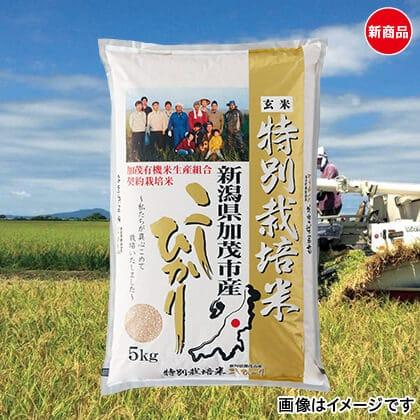 特別栽培米コシヒカリ 玄米