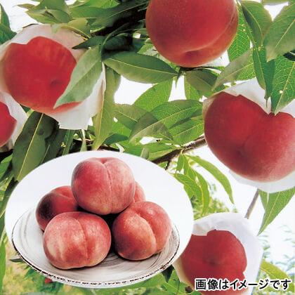 にしむらの桃