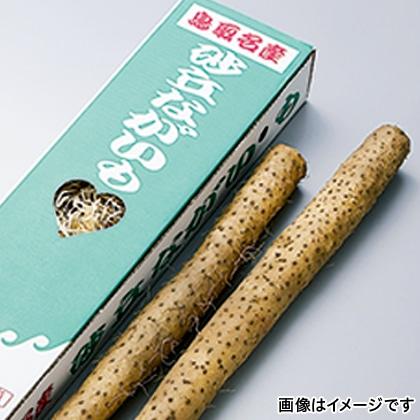 砂丘長芋 1.8kg