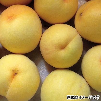 黄金桃 1.7kg