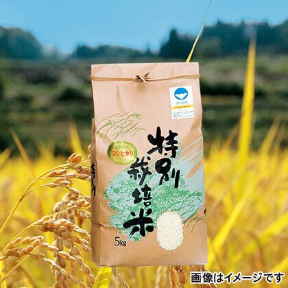 特別栽培米コシヒカリ 5kg