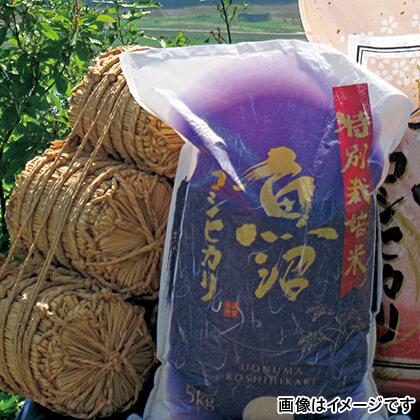 特別栽培米魚沼産コシヒカリ 5kg