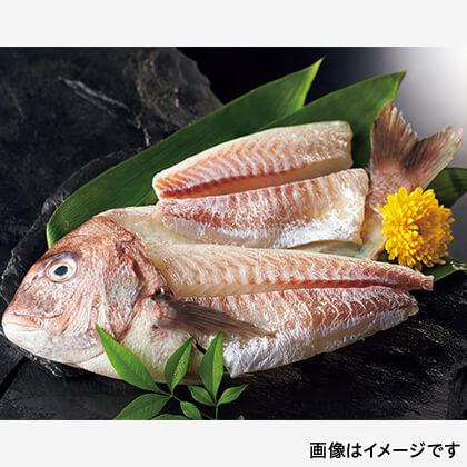 鯛姿造り用