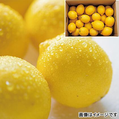 瀬戸内レモン 3kg