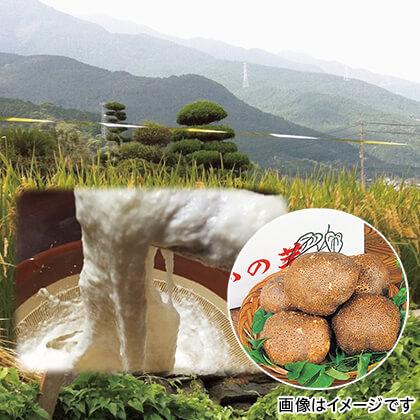 伊予の山の芋 4kg