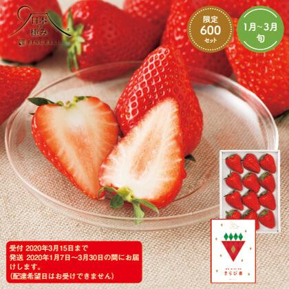 [日本の極み]静岡県産 真っ赤に完熟きらぴ香