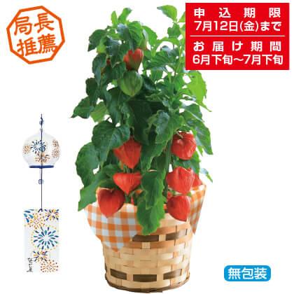 ほおずき鉢植と風鈴セット