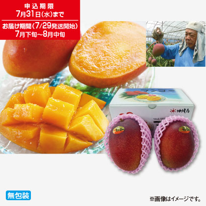 沖縄県産マンゴー
