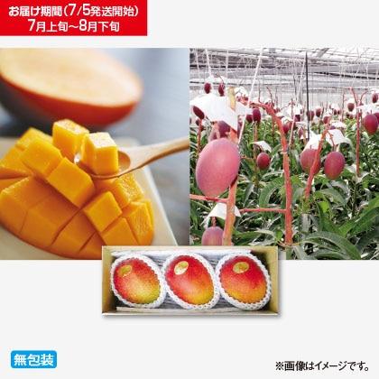 沖縄産完熟マンゴー 1kg