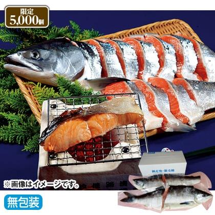 網走発・銀毛鮭(2.5kg)
