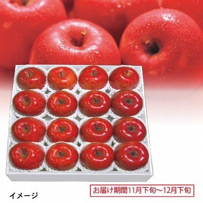 青森 蜜入 サンふじりんご