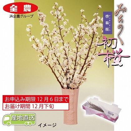 みちのく初桜(啓翁桜)