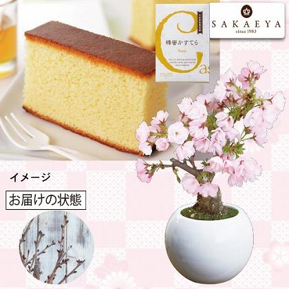 桜盆栽とはちみつカステラ