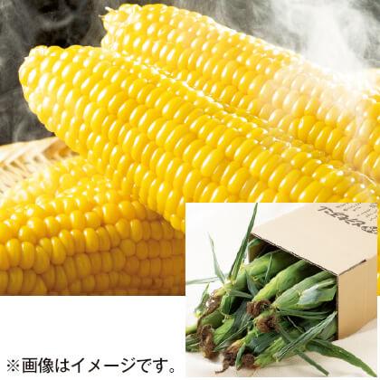 北海道産 ゴールドラッシュ