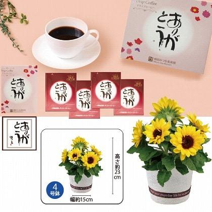 ひまわり鉢植と相田みつを「ありがとうコーヒー」