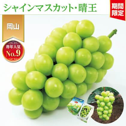 岡山県産シャインマスカット「晴王」