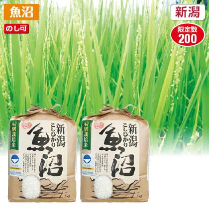 魚沼コシヒカリ特別栽培米5kg×2 2019年産米2