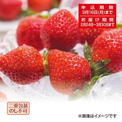 福岡県産 あまおう苺
