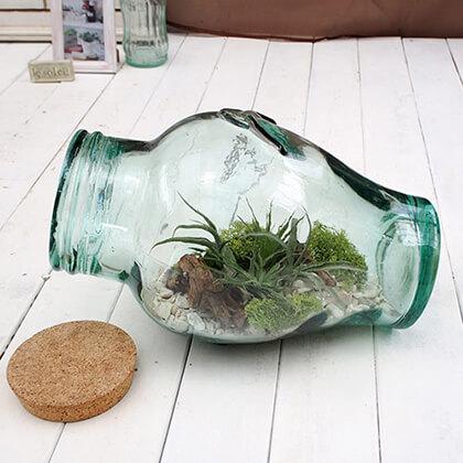 観葉植物「エアープランツ・ボトルキット」