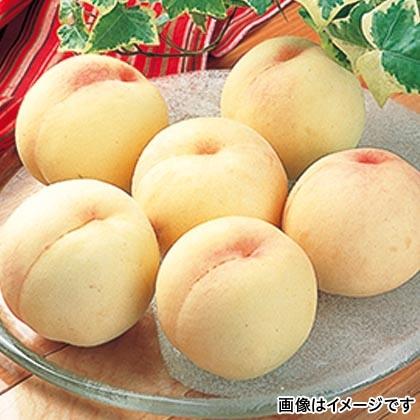 岡山の桃 6個