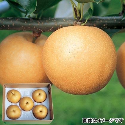 豊水梨 2kg