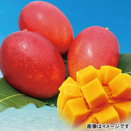 沖縄燦々マンゴー 1kg