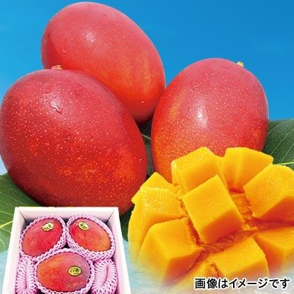 沖縄燦々マンゴー 1.5kg