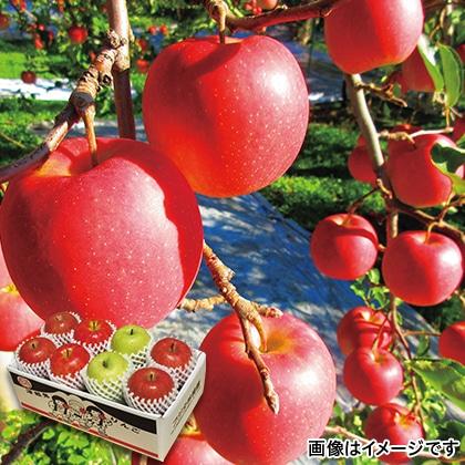 津軽鬼りんご2.6kg(3種詰合せ)