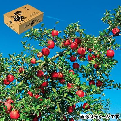 信州りんご サンふじ ご贈答用 3kg