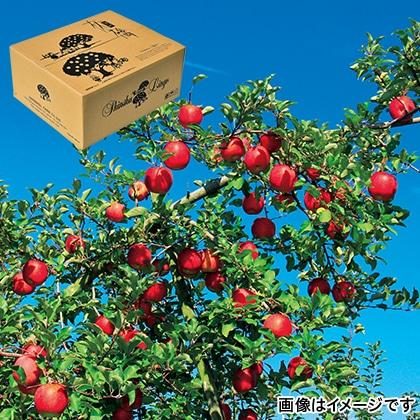 信州りんごサンふじ ご贈答用 10kg
