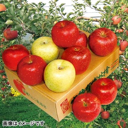 旬のりんご(家庭用)